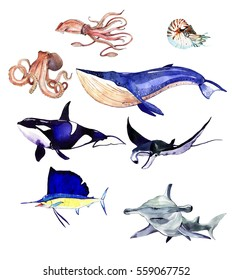 Watercolor set of sea fishes, whale, octopus,squid, ramp, hammerhead shark illustration isolated on white background