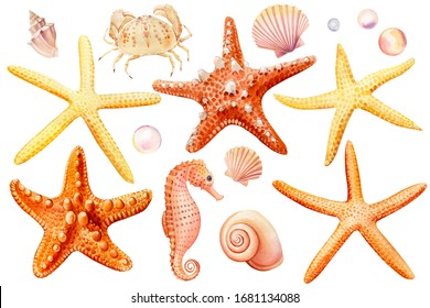 Watercolor set of seashells, crab, seahorse, starfish, bubbles, on an isolated white background, hand drawing, summer sea clipart