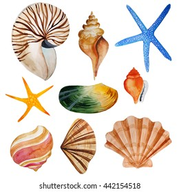 Watercolor set with shells and sea stars