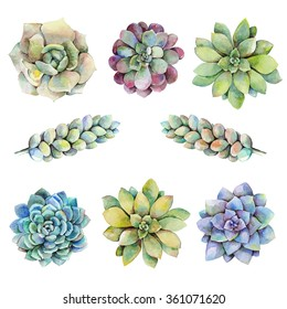 Watercolor set with succulents. Hand drawn raster illustration