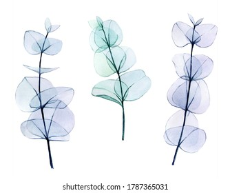 watercolor set of transparent colored eucalyptus leaves. delicate drawing in pastel colors, eucalyptus branches x-ray. vintage design element for wedding, cosmetics, perfumery.