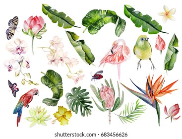 Watercolor set with tropical leaves, flowers and birds. Illustration