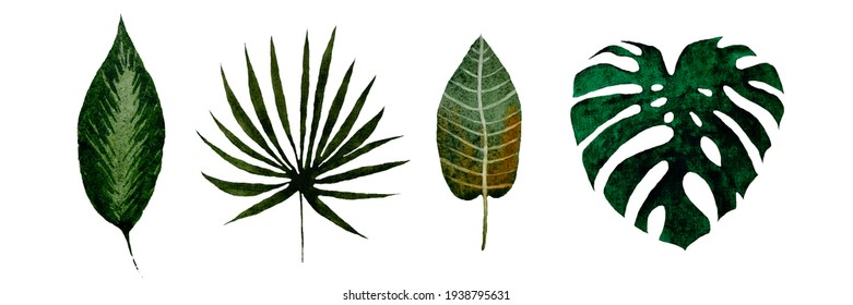 watercolor set of tropical leaves, isolated on white background