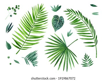 Watercolor set of tropical leaves on a white background. Fresh greenery. Tropical clipart. Palm leaves, anthurium crystallium leaf, twigs, leaves. Hand drawn botany set.