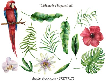 Watercolor set with tropical leaves and parrot. Hand painted palm branch, fern, macaw and leaf of magnolia and flowers. Tropic plant isolated on white background. Botanical illustration. For design.