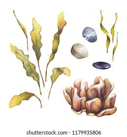 Watercolor set of underwater life objects with coral, laminaria, seaweed and stones. Hand painted underwater illustration  isolated on white background