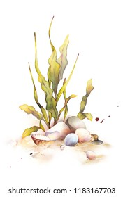 Watercolor set of underwater life objects. Hand-drawn composition of marine shells, algae plants, coral and stones