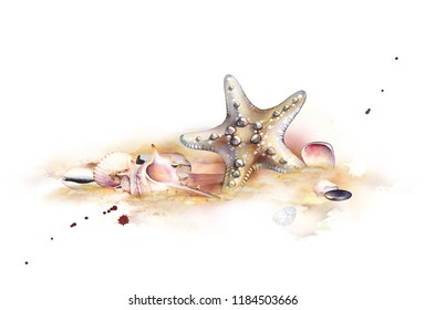 Watercolor set of underwater life objects. Seashells on the beach. Hand-drawn composition of starfish, stones and seashells. Watercolor illustration