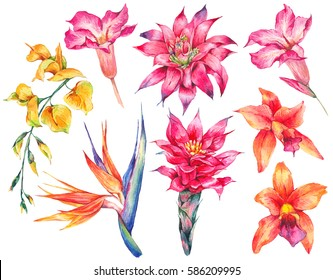 Watercolor set of vintage floral tropical natural elements. Exotic flowers, botanical bright classic nature collection isolated on white background.