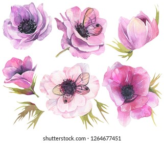 Watercolor set with violet anemones. Hand drawn illustration on white background.