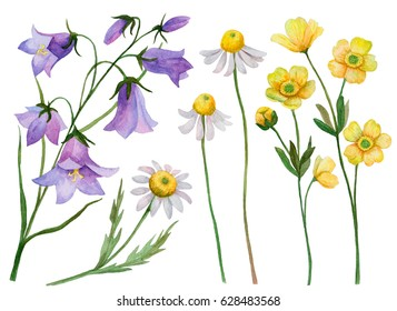 Watercolor set of wild flowers, hand drawn illustration of chamomiles, bluebells and buttercups isolated on white background.