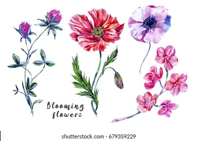 Watercolor set of wildflowers, poppy, anemone, clover, orchid flower, botanical natural summer illustrations. Floral elements isolated on white background for greeting card, wedding, wallpaper