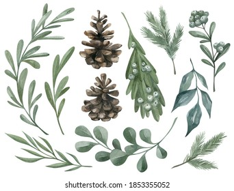 Watercolor set with winter botanical elements. Fir, pine cone, berry, branch, mistletoe, euqalypt, leaves, dried plant. Nature elements.