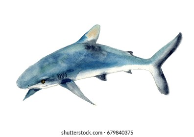 Watercolor shark sketch. Beautiful kids illustration. Illustration isolated on white background for design,print or background.