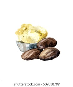 Watercolor Shea nuts plant, berry, fruit natural organic butter ingredient. Hand drawn sketch engraved illustration isolated on white background for cream for hand Treatment, care, food, cosmetic