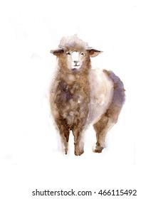 Watercolor sheep, hand drawn cute illustration. Creative farm animals. Background for Muslim Community, Festival of Sacrifice, Eid-Al-Adha Mubarak. Tee-shirt graphic