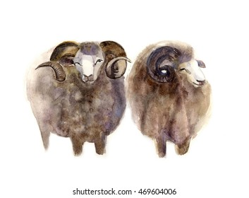 Watercolor sheep, hand drawn cute illustration. Creative farm animals..Background for Muslim Community, Festival of Sacrifice, Eid-Al-Adha Mubarak. Tee-shirt graphic