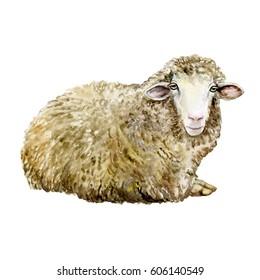 Watercolor sheep, hand drawn cute illustration. Creative farm animals..Background for Muslim Community, Festival of Sacrifice, Eid-Al-Adha Mubarak. Tee-shirt graphic Sheep. Watercolor. Illustration