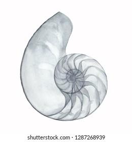 Watercolor Shell. Golden Ratio. Transparent Seashell. Nautilus