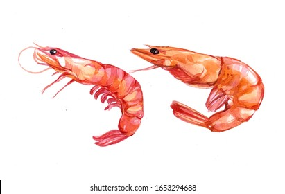Watercolor Shrimp on white background