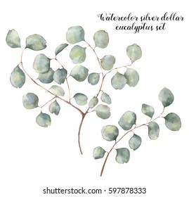 Watercolor silver dollar eucalyptus set. Hand painted floral illustration with round leaves and branches isolated on white background. For design, print and fabric