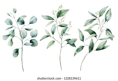 Watercolor silver dollar and seeded eucalyptus set. Hand painted eucalyptus branch and leaves isolated on white background. Floral illustration for design, print, fabric or background