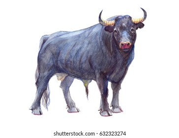 Watercolor single bull animal isolated on a white background illustration.