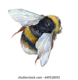 Watercolor single bumblebee insect animal isolated on a white background illustration.