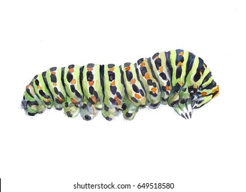 Watercolor single caterpillar insect animal isolated on a white background illustration.