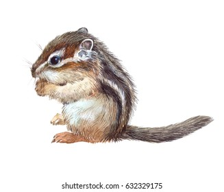 Watercolor single chipmunk animal isolated on a white background illustration.