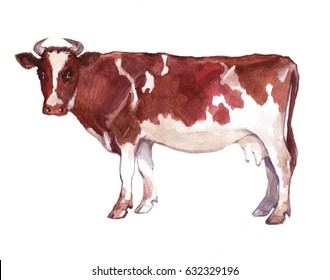 Watercolor single cow animal isolated on a white background illustration.