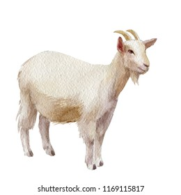 Watercolor single goat animal isolated on a white background illustration