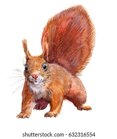 Watercolor single squirrel animal isolated on a white background illustration.