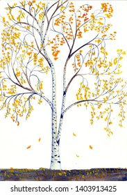 Watercolor sketch - autumn birch with yellow leaves on a white background