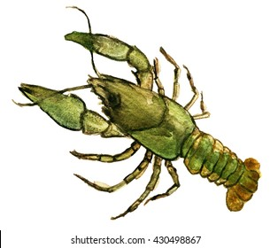 watercolor sketch of crayfish animal on a white background