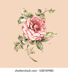 Watercolor Sketch delicate rose-1. Retro. Vintage.