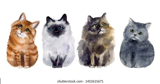 Watercolor sketch illustartion with funny cats