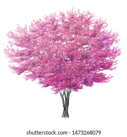 Watercolor Sketch of a Redbud Tree