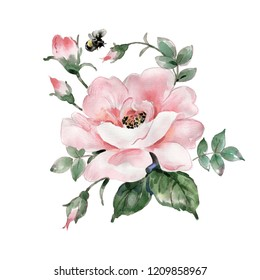 Watercolor sketch of a rose with buds and foliage and a bumblebee.