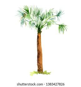 watercolor sketch of Washingtonia robusta palm tree, fan palm, hand drawn illustration