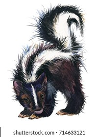 watercolor skunk illustration. fashion Tee shirt design.