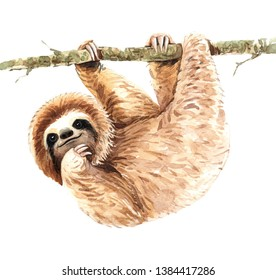 Watercolor sloth illustration. Tropical animal. Watercolor boho tropical drawing, exotic flower. Baby shower card layer path, clipping path isolated on white background.