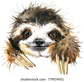 Watercolor sloth illustration. tropical animal