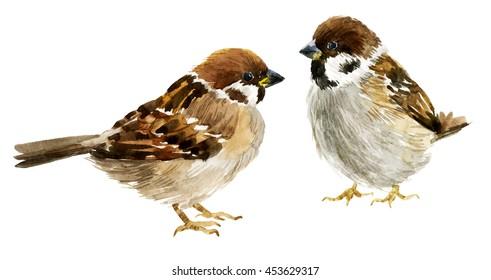 watercolor sparrow, illustration, little bird