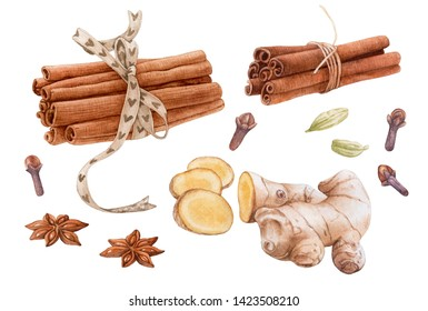 Watercolor spices isolated on white background. Cinnamon, anise, cardamon, clove, ginger root.