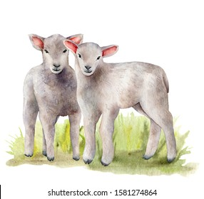 Watercolor spring card with meadow and lambs. Hand painted green grass and a pair of sheep isolated on white background. Animal illustration for design, print, fabric or background