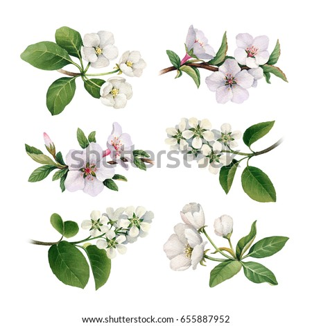 Watercolor Spring Flowers Blooming Trees Stockillustration 655887952