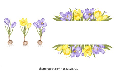 Watercolor spring flowers. Yellow and violet crocuses. The border, a flower frame are isolated on a white background