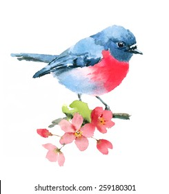Watercolor Spring Pink Robin On Cherry Blossoms Branch Hand Painted isolated on white background
