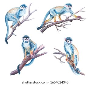 Watercolor squirrels monkey collection on a white background. Wild animals of Africa.